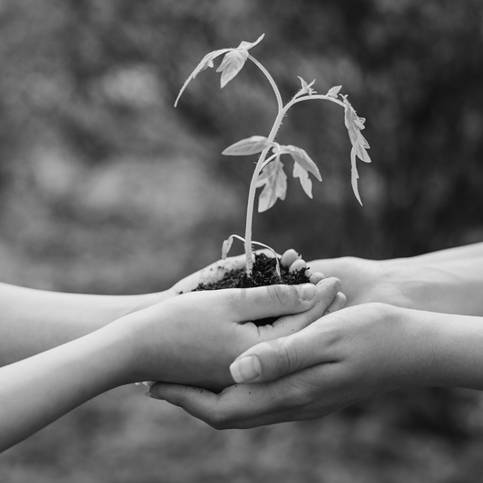 hands holding a plant and soil without a pot